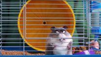 Pets 2 Max-Trailer DF