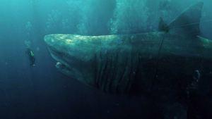 """Nach """"Rebecca"""" auf Netflix: Regisseur macht Monster-Hai-Sequel"""