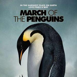 Die Reise der Pinguine : Kinoposter