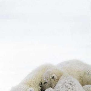 Unsere Erde - Der Film : Bild Alastair Fothergill
