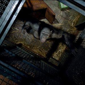 Planet der Affen: Prevolution : Bild Rupert Wyatt