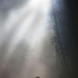 The Boy : Bild Lauren Cohan
