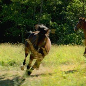Pferde stehlen : Bild Jon Ranes
