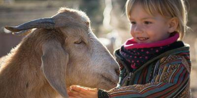 """Im Trailer zu """"Citizen Animal – A Small Family's Quest For Animal Rights"""" kommen Tierschützer aus aller Welt zu Wort"""
