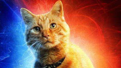 """Die süße Katze aus """"Captain Marvel"""" hat tatsächlich ein fieses Geheimnis"""