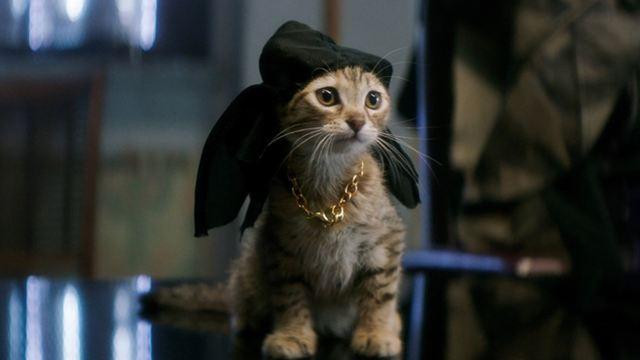 """Das macht die Katze froh: Erster deutscher Trailer zur Action-Komödie """"Keanu"""" mit Key & Peele"""