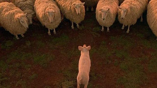 Die garantiert einschläferndste Bildergalerie aller Zeiten: Schäfchen zählen mit FILMSTARTS!