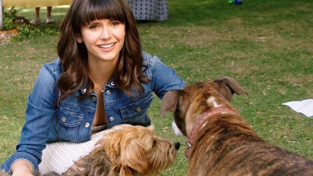 """Trailerpremiere zu """"Dog Days"""": Ein """"Stranger Things""""-Star, eine Netflix-Prinzessin und jede Menge Hunde"""