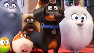 """""""Pets 2"""": Fortsetzung des tierischen Animations-Abenteuers hat einen deutschen Kinostart"""