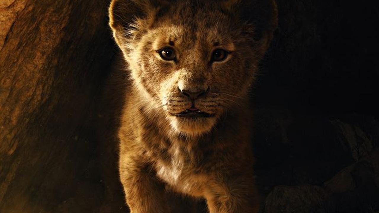 König Der Löwen Im Tv