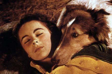 Held auf vier Pfoten : Bild Elizabeth Taylor, Fred M. Wilcox
