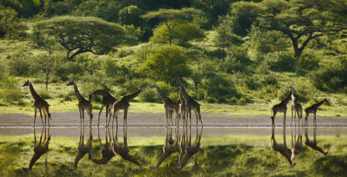 Serengeti : Bild