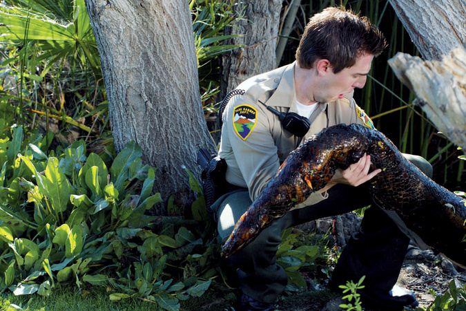 Mega Python vs. Gatoroid : Bild