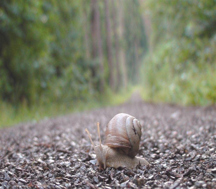 Slow - Langsam ist das neue Schnell : Bild