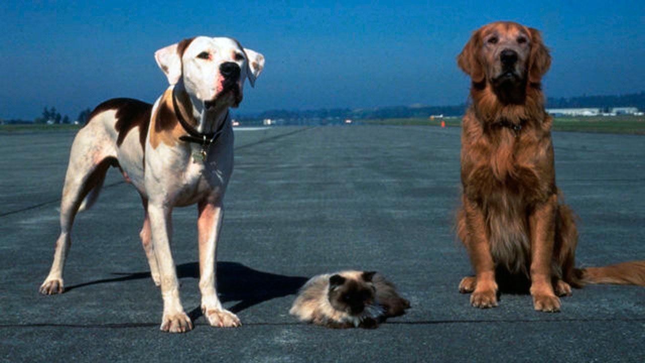 Ein tierisches Trio - Wieder unterwegs : Bild