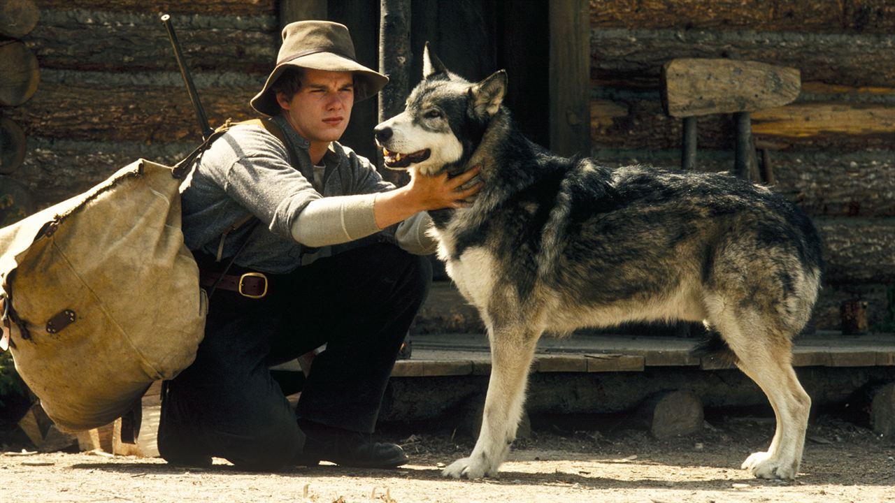 Wolfsblut Film