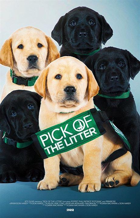 Poster Zum Pick Of The Litter Bild 1 Filmstartsde