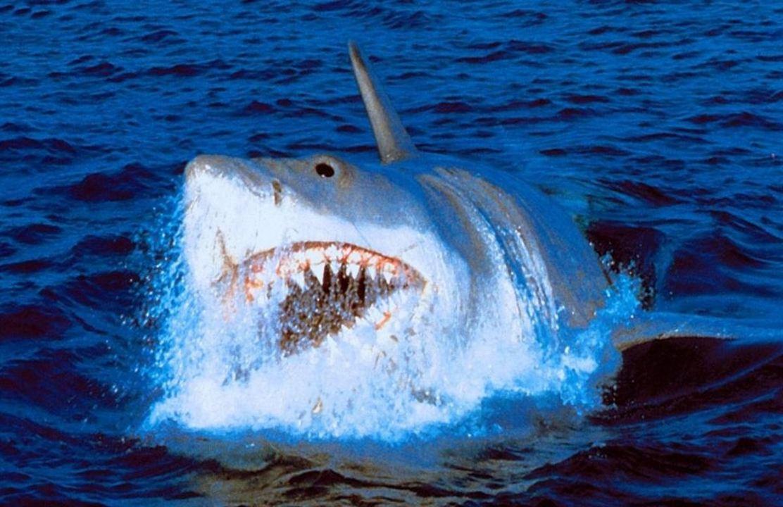 Neuer Hai Film