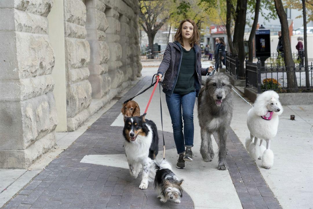 Bailey - Ein Hund kehrt zurück : Bild Kathryn Prescott