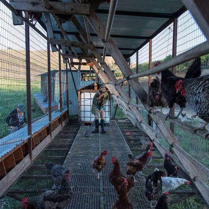 Unsere große kleine Farm : Bild