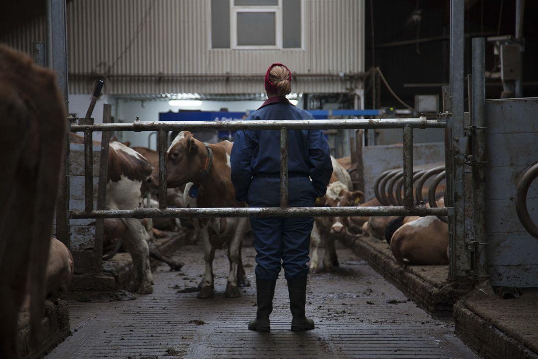Milchkrieg in Dalsmynni : Bild Arndís Hrönn Egilsdóttir