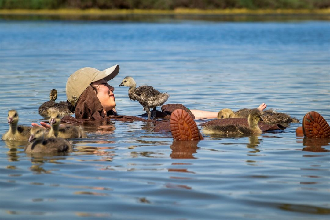 Der Junge und die Wildgänse : Bild Louis Vazquez