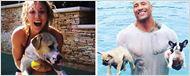 So süß: Die Haustiere der Hollywood-Stars