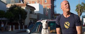 """Bruce Willis macht den """"John Wick"""": Killer mit Hund im ersten Trailer zu """"Once Upon A Time In Venice"""""""