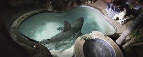 """Trailer zu """"The Burning Kiss"""": Ein Hai im Pool und blutige Scheren im Bett"""