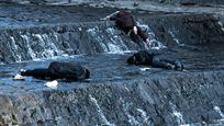 """Kino-Hit nun auch in Deutschland: Mörder-Parasiten im deutschen Trailer zu """"Contamination"""""""
