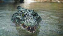 """Da schlottern sogar King Kong die Knie: Deutscher Trailer zum Monster-Horror """"Crocodile Island"""""""