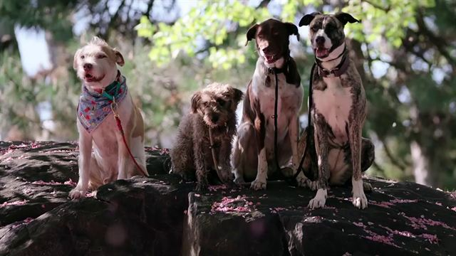 Dogs Trailer OV