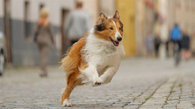 Lassie - Eine abenteuerliche Reise Trailer (3) DF