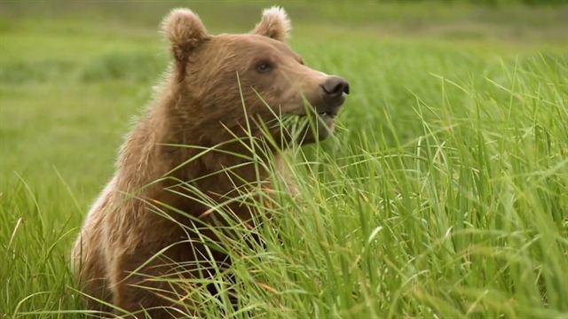Der Bär in mir Trailer OV