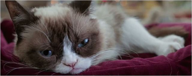 Miau! 30 schräge Bilder, auf denen Stars mit einer Katze posieren
