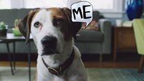 Downward Dog Teaser OV