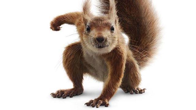 """Disneys neuer Superheld ist ein Eichhörnchen: Deutscher Trailer zu """"Flora & Ulysses"""""""